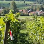 Biowijn in bierland
